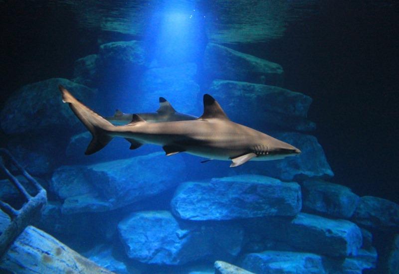 Requins Aquarium Amneville